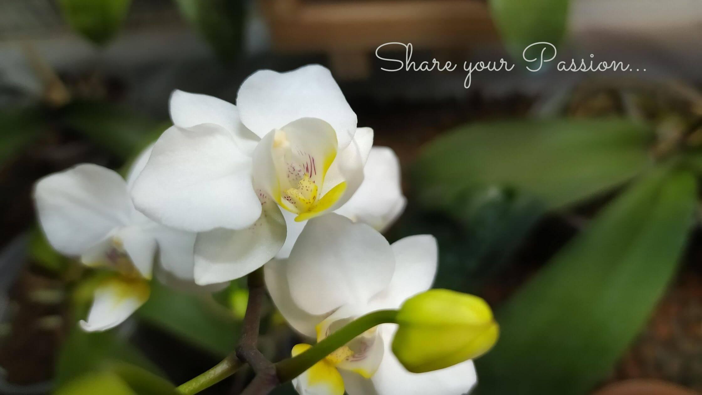 Come prendersi cura delle orchidee durante le vacanze