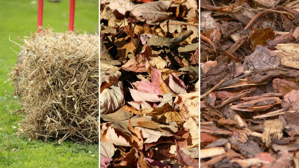 Pacciamatura in paglia, foglie secche e corteccia