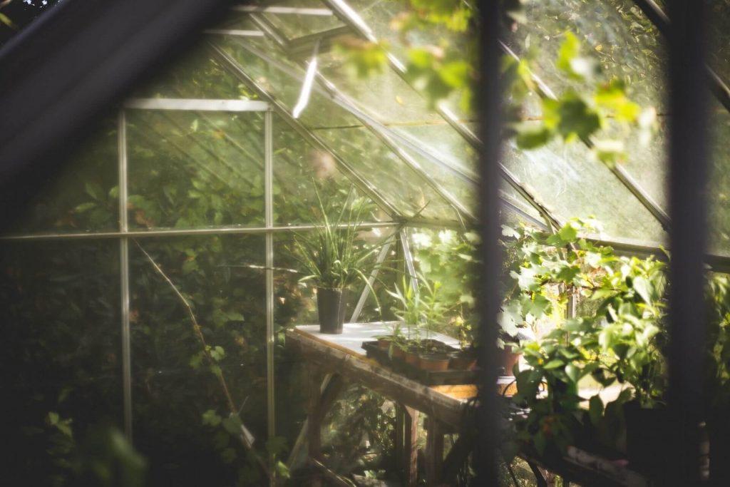 Serra invernale per piante da esterno