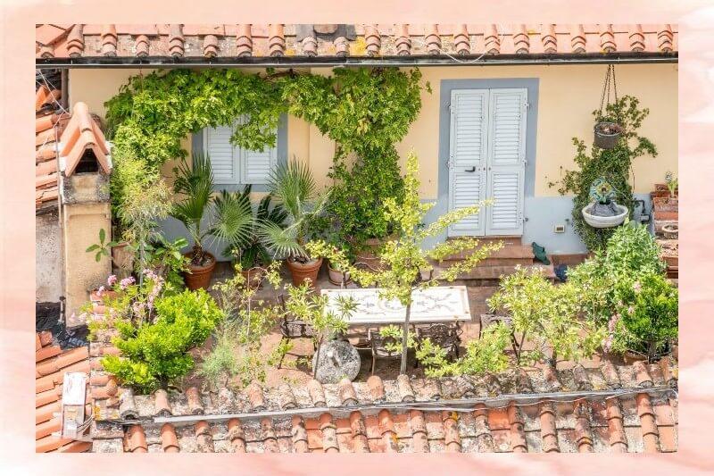 Piante rampicanti da terrazzo/balcone